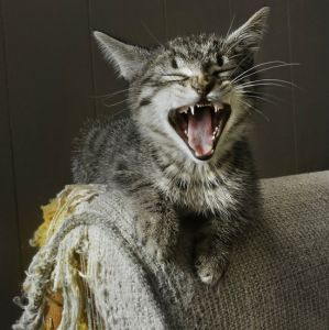 Best-Scratching-Posts-Cats